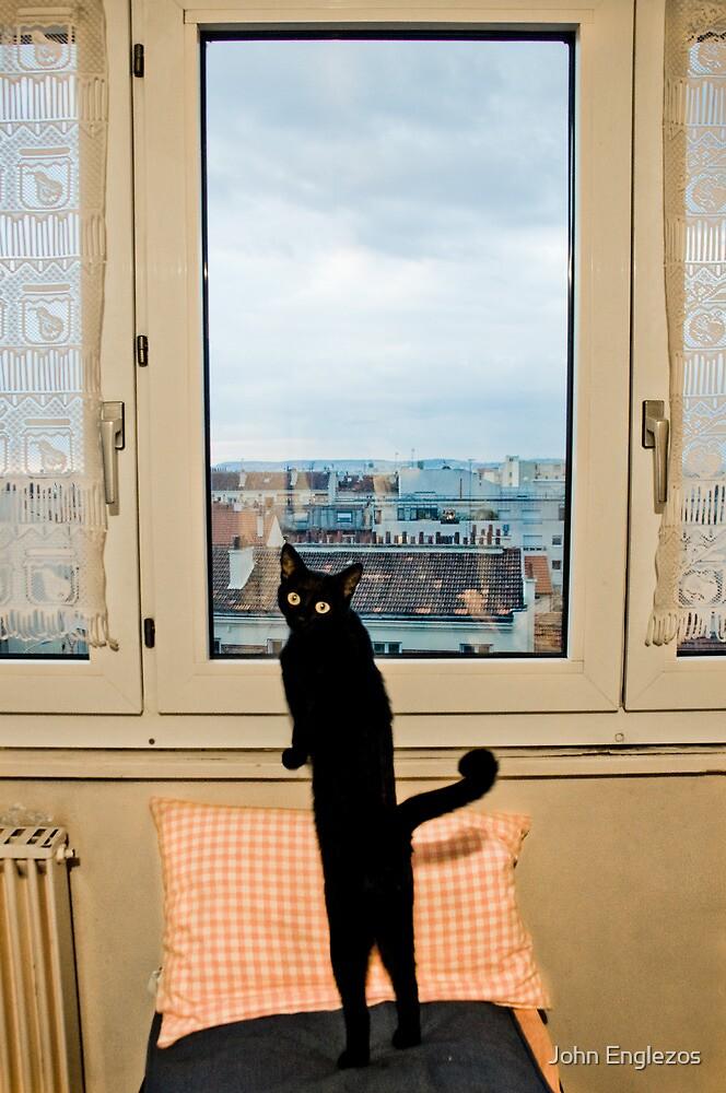 Paris Cat by John Englezos