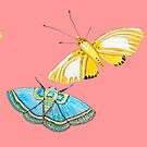 Blue butterfly & yellow moth on Coral, Summer by MagentaRose