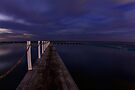North Narrabeen Howling by Sharon Kavanagh