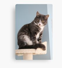 What 'mew Lookin' at? Canvas Print