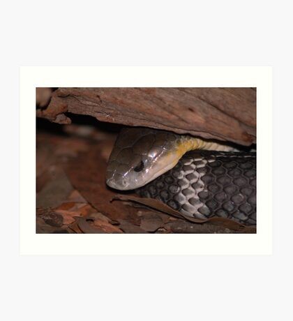 Eastern Brown Snake Art Print
