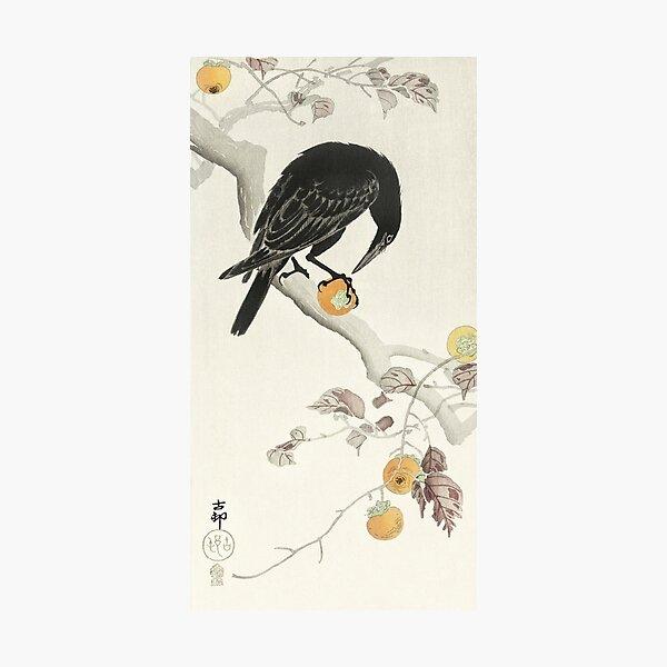 Koson Ohara - Crow with Kaki Fruit Photographic Print