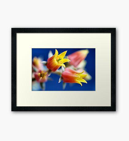 Bloomy again! Framed Print