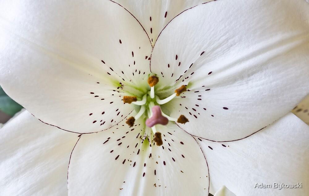 Lily Leaf Trio by Adam Bykowski