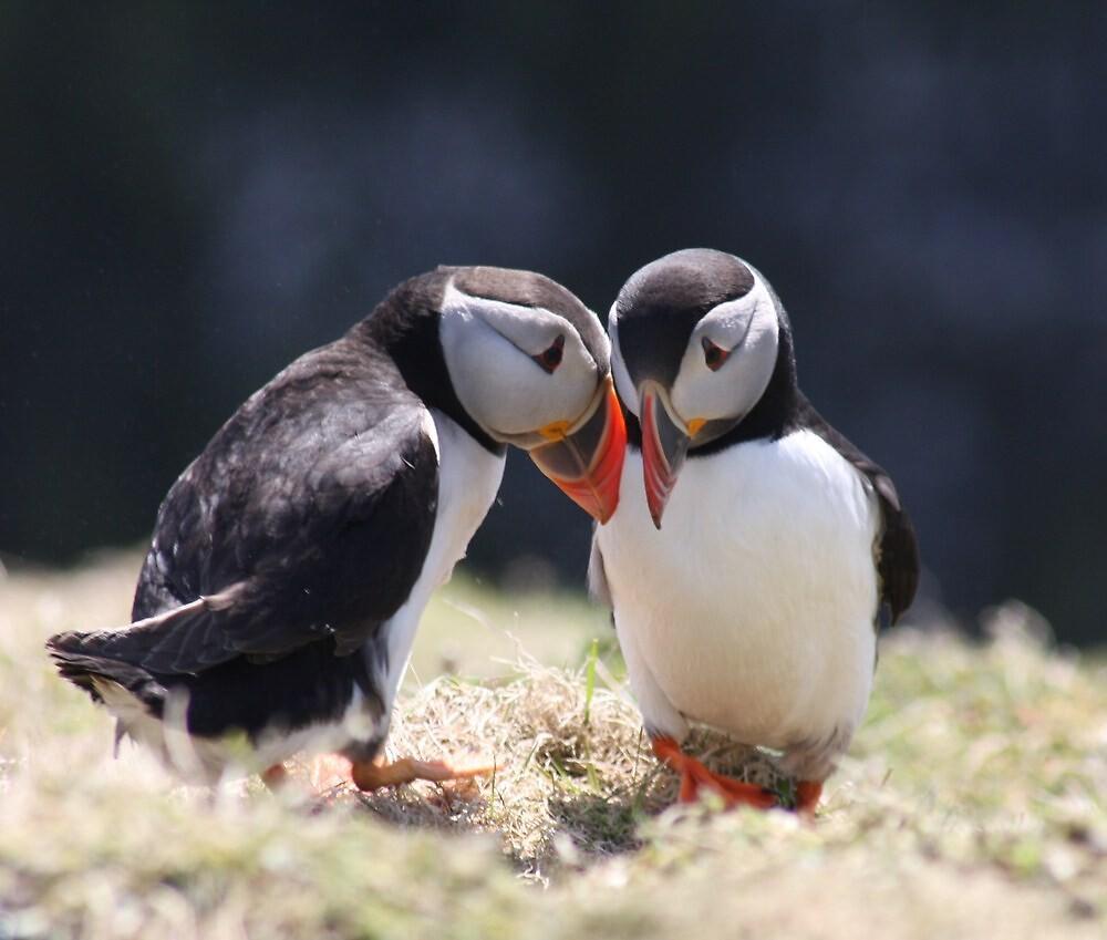puffin love