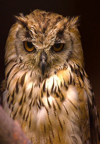 Owl #2 by Trevor Kersley