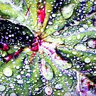Raindrops by Merice  Ewart