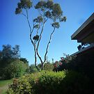 View of Tree from House by EdsMum
