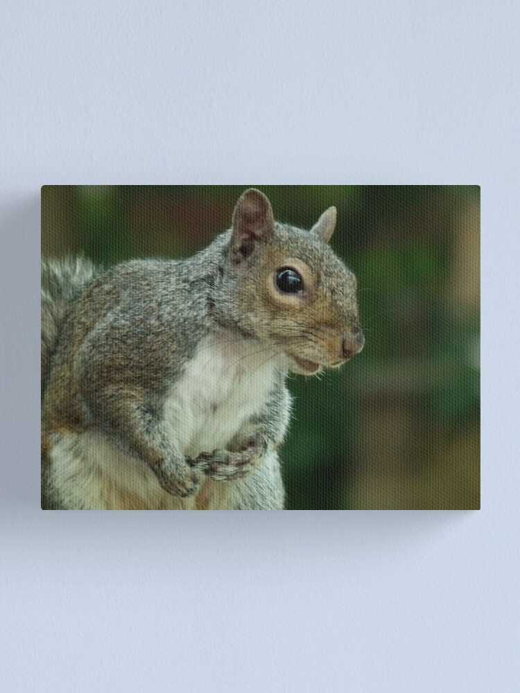 Alternate view of Squirrel 3 Canvas Print