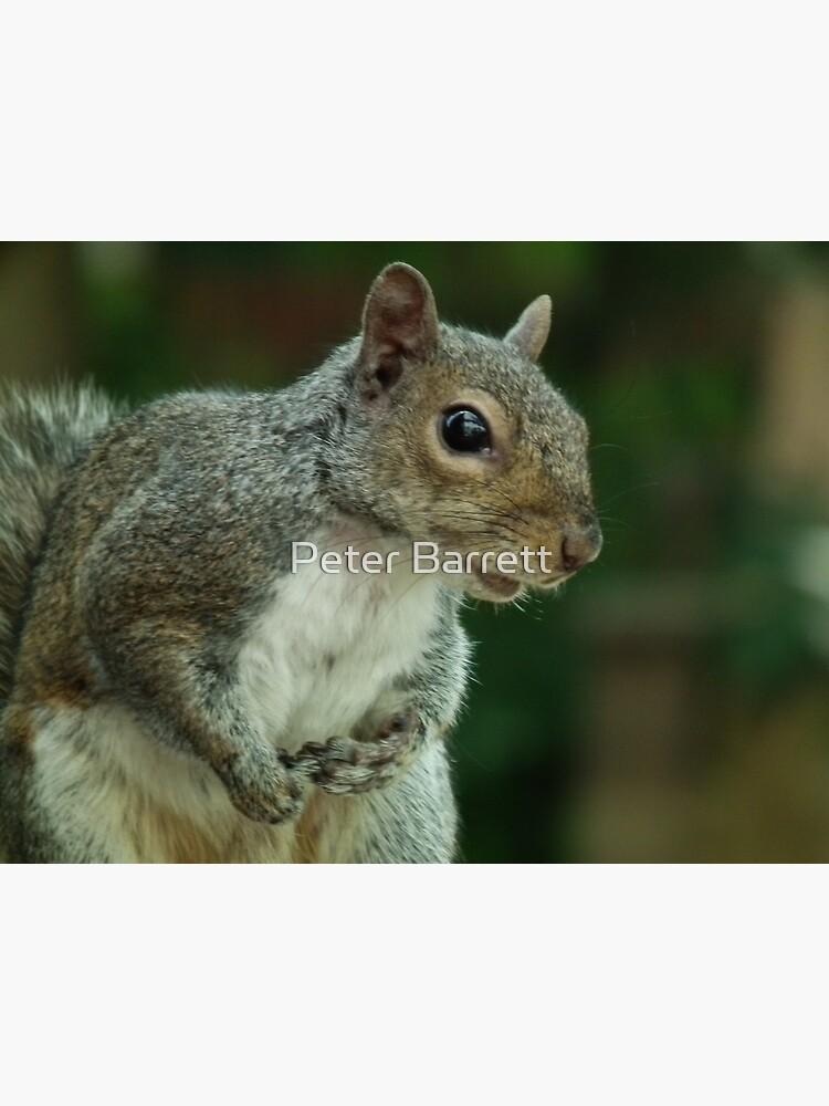 Squirrel 3 by hartrockets