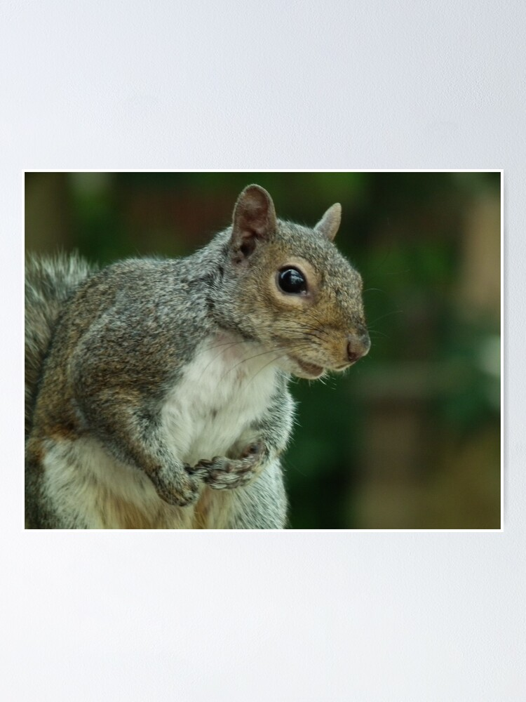Alternate view of Squirrel 3 Poster