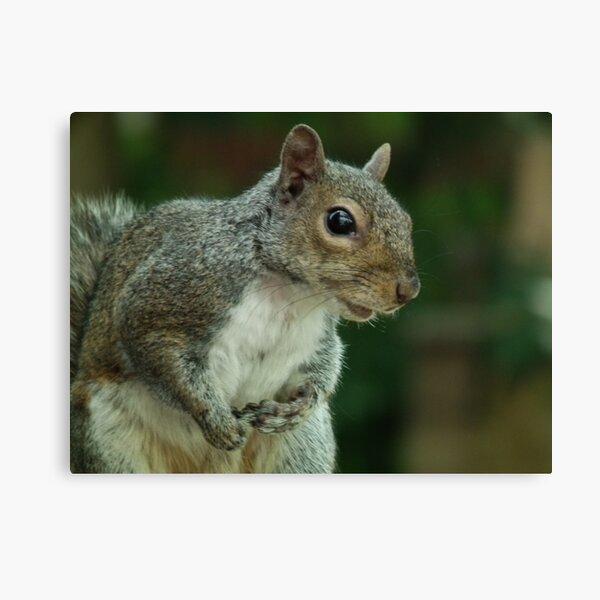 Squirrel 3 Impression sur toile