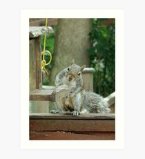 Squirrel 4 - please sir can I have some more? Art Print