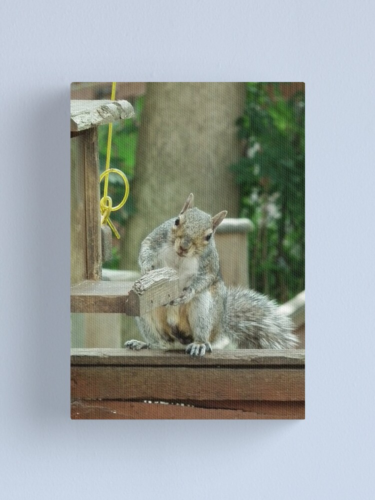 Alternate view of Squirrel 4 - please sir can I have some more? Canvas Print