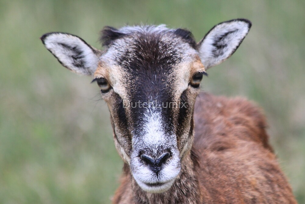 Cornered Car Thief Turned Himself Into Goat by DutchLumix
