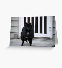 Luci Greeting Card
