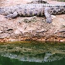 Le Croc & His Reflection by Graham Geldard