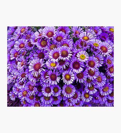 Purple wall Flowers Photographic Print