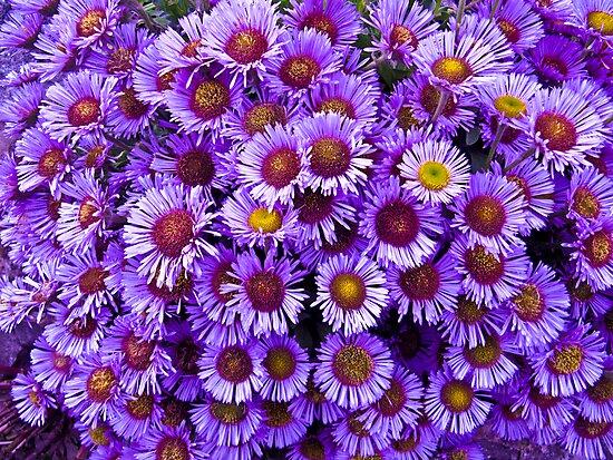 Purple wall Flowers by Lyndy