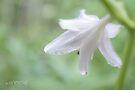 Garden Princess by aMOONy