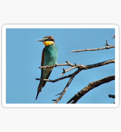EUROPEAN or GOLDEN-BACKED BEE-EATER - merops nubicoides Sticker