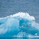 Tip of the Iceberg by Tracy Riddell