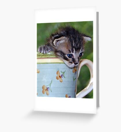 Kitty! Greeting Card