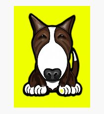 Brown Patch English Bull Terrier Photographic Print