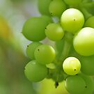 Grapes by Corkle