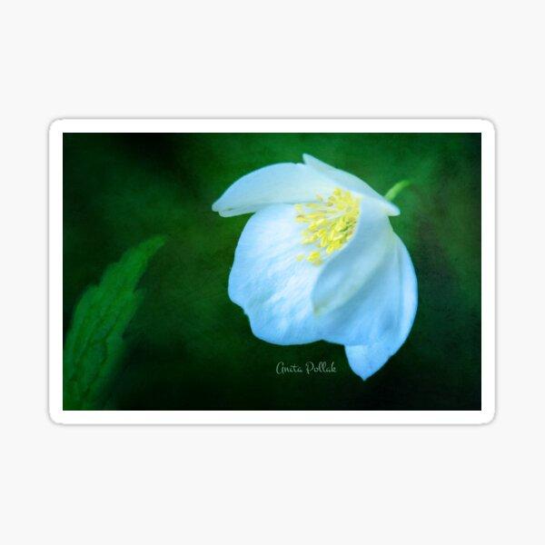 White Cranesbill Blossom Sticker