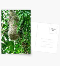 Weaver Bird nest Postcards