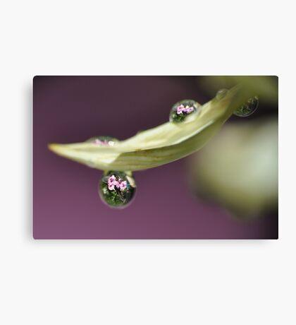 A Drop Of Nature  Canvas Print