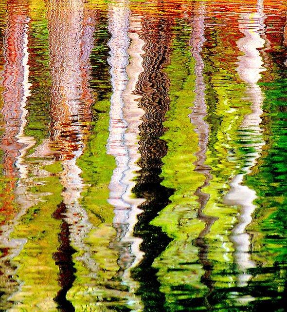 Tree reflections by Brian Bo Mei
