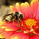 Pollen Prince by Zoe Marlowe