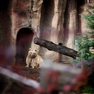 My Inner Brown Bear, Melbourne Zoo by russell