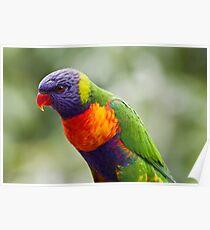 A Colourful Portrait Poster