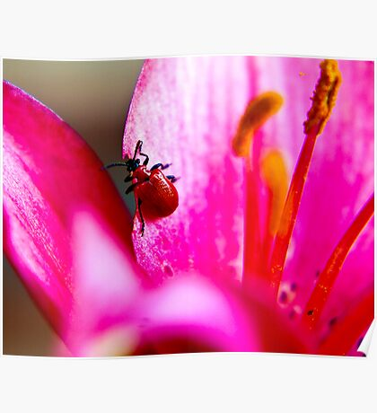 Lily Beetle Poster