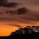 Bush Sunset by Peter Doré