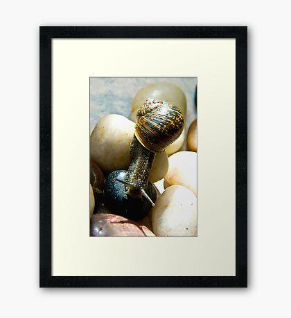 Snail #7 Framed Print