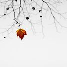 Winter Day by blueeyesjus