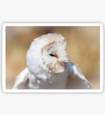 Head Of White Barn Owl Sticker