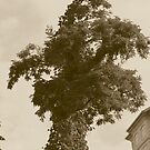 Monster Tree by DebbieCHayes