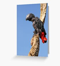 African Grey Parrot - (Psittacus erithacus) Greeting Card