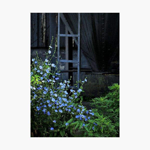 Blue Devils Photographic Print