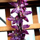 Ochids In a Row by Mattie Bryant