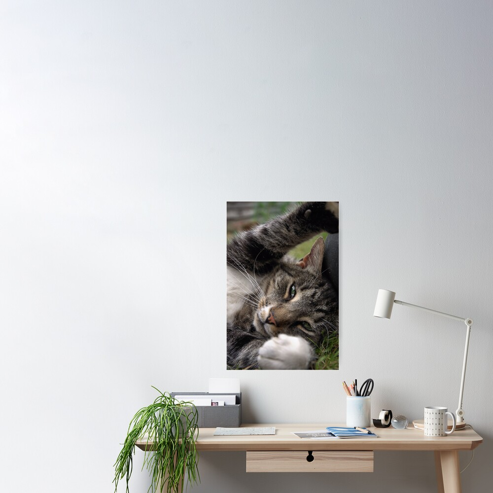 Playful Tiger Poster