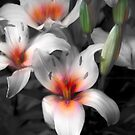 Tag Lilly Bouquet von CarolM