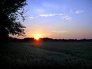 Kansas Fireworks Over A Cornfield by Carla Wick/Jandelle Petters