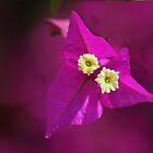 Foxy flower. by Paul Pasco
