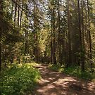 Path to the pine forest  by Svetlana Korneliuk